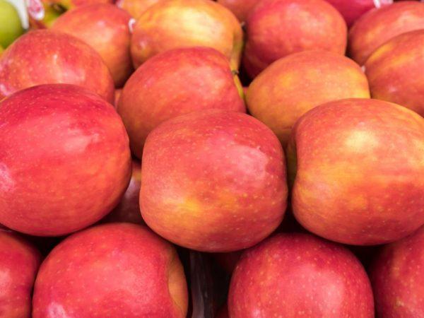 Яблоня дает урожай даже без опылителей