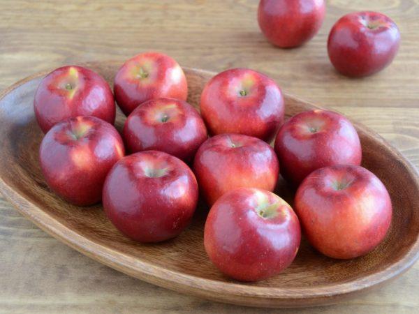 Поздняя зимняя яблоня Белорусское малиновое