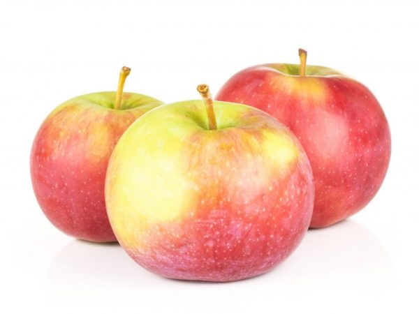 Выращивание яблони Джонаголд