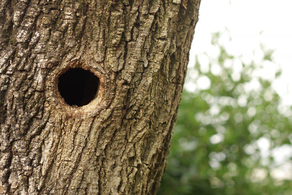 Как залечить большое дупло на яблоне, чем замазать дырки в стволе