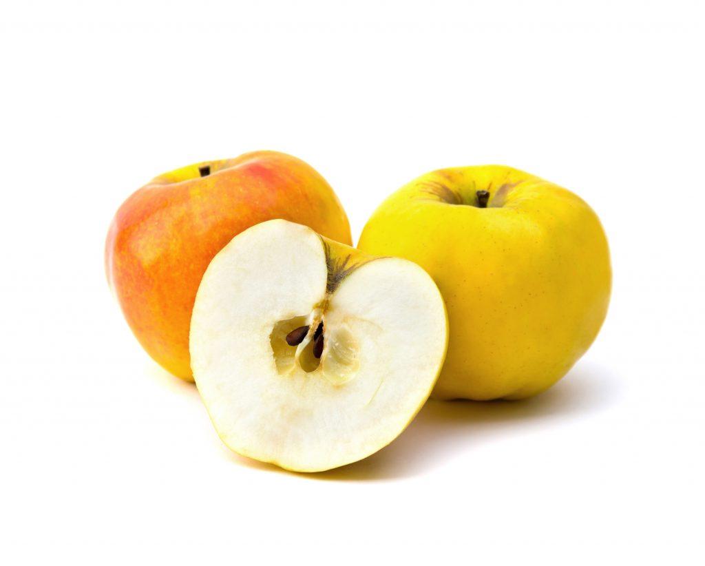 Сорт яблони кальвиль уральский румяный