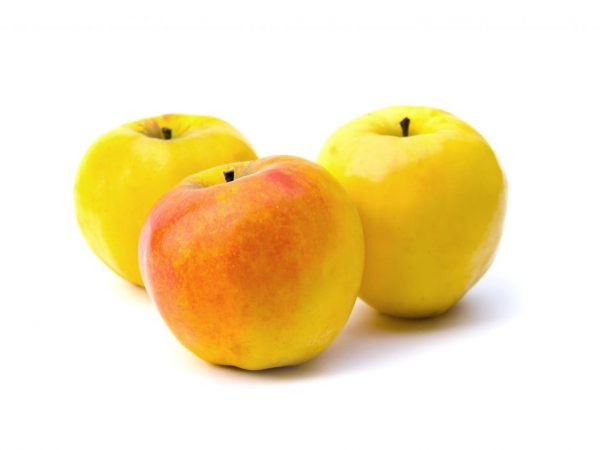 Яблоня не требует повышенного внимания
