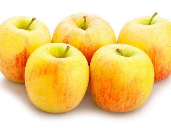 Отличные яблочки при правильной посадке дерева