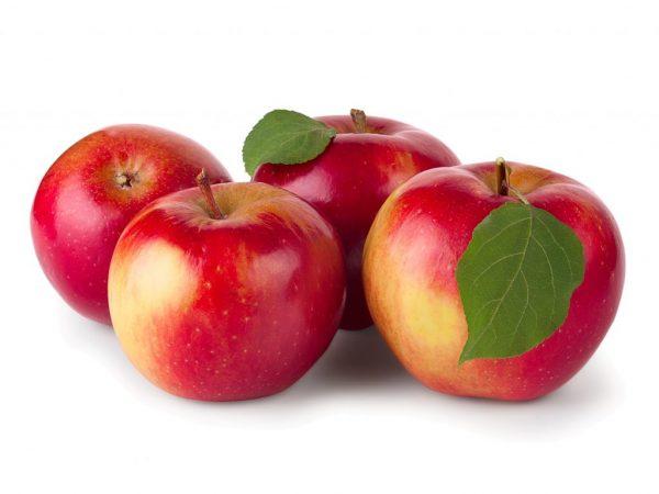 Выбирать яблоню нужно правильно