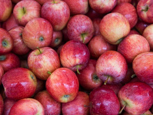 Яблоня не требует тщательного ухода