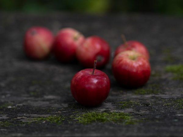 Яблоня данного вида относительно не высокая