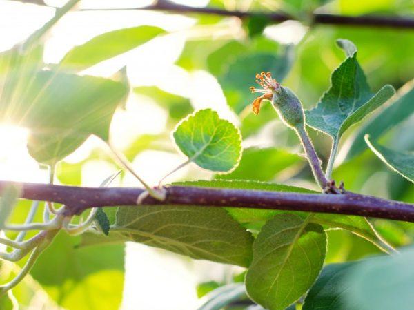 Профилактические меры помогут сохранить здоровье дерева