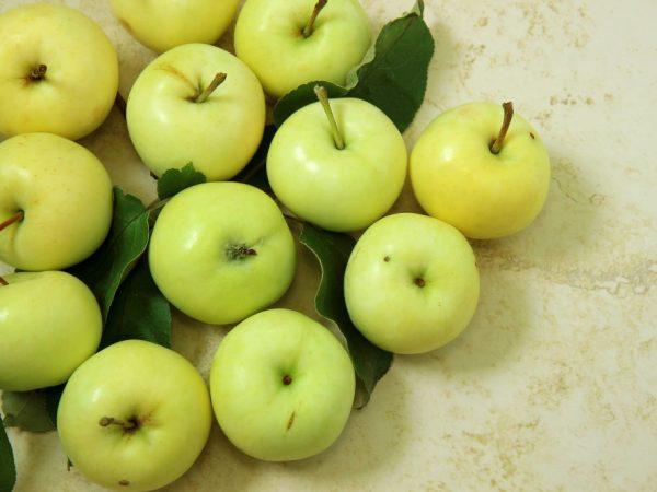 Яблочки обладают хорошими вкусовыми качествами
