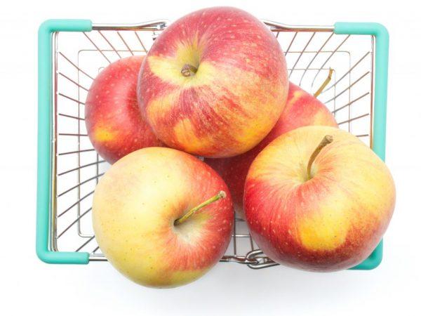Описание яблони сорта Орловское Полосатое