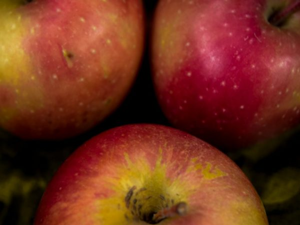 Обрезка яблони не влияет на урожайность