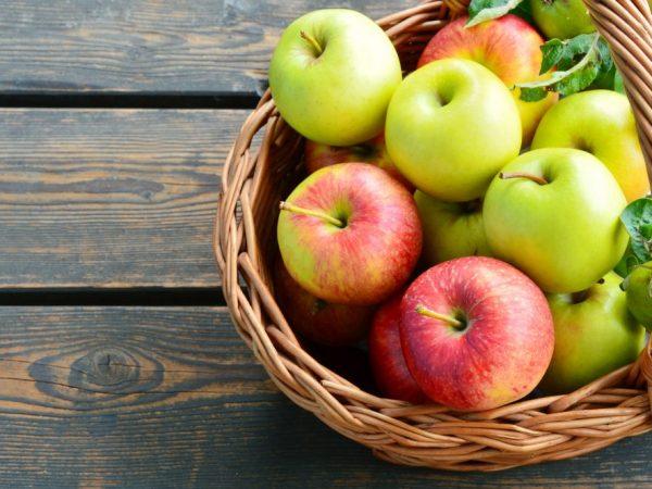 Очень плодовитый сорт яблок