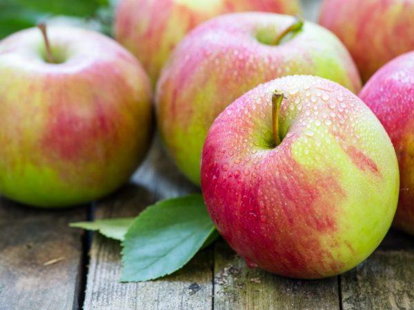 Яблоня даст больший урожай при посадке осенью