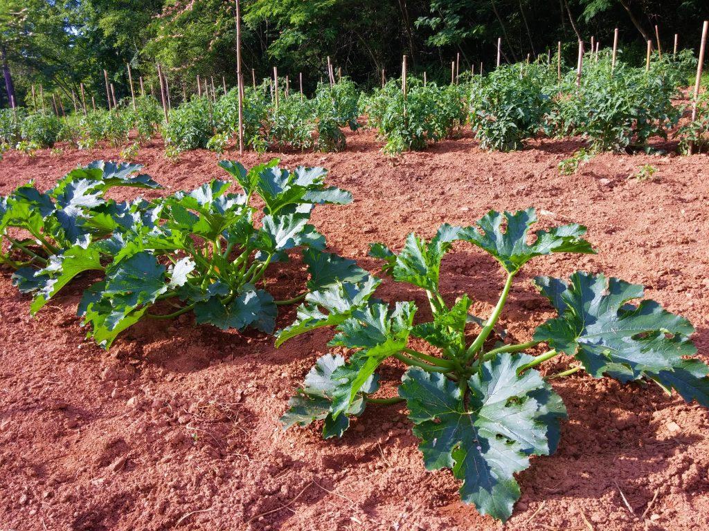 Как сохранить кабачки свежими до весны