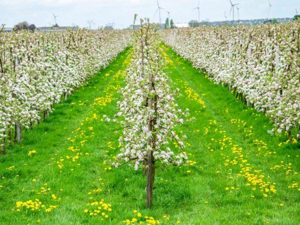 Молодые деревья нуждаются в обильном поливе