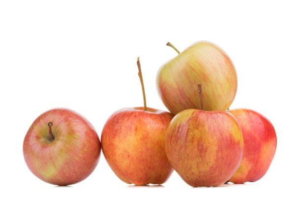 Яблони пересаживают весной или осенью