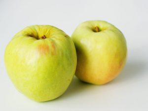 Сортовые особенности яблони Антоновка