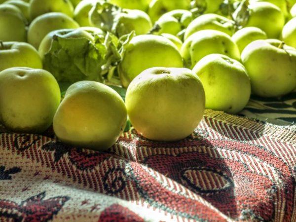 Первые плоды можно получить через пять лет