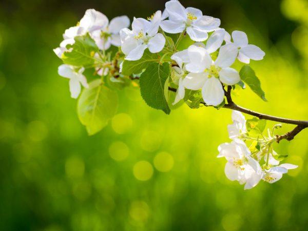 Удобрения помогают дереву развиваться правильно