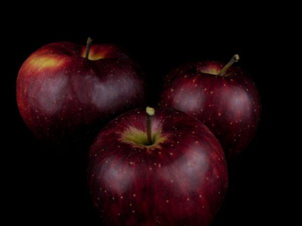 Бельгийские яблоки Черный Принц
