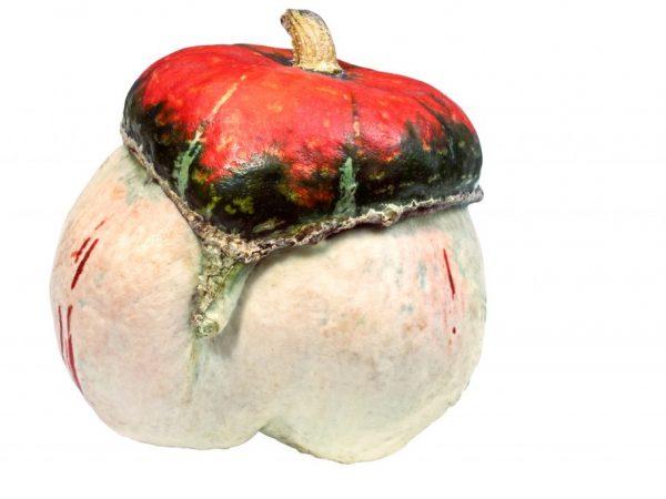 Особенности тыквы Красная Шапочка