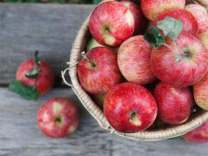 Выращивание яблони Свежесть