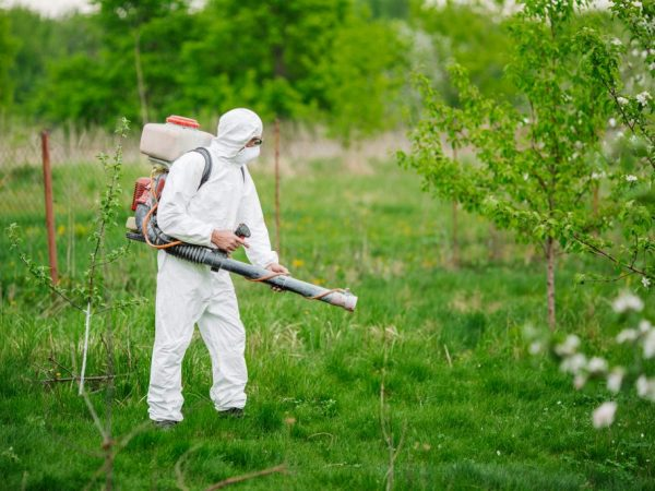 Обработка защитит дерево от вредителей