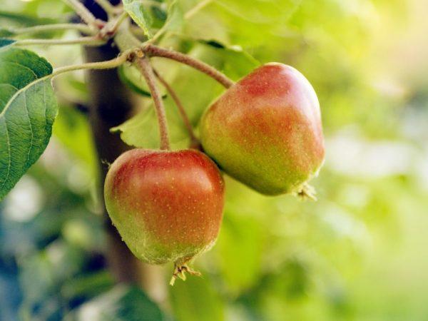 Хороший урожай зависит только от вас