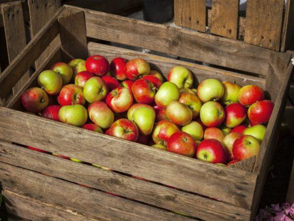 Яблки хорошо хранятся в сухих помещениях