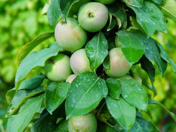 Качественный уход обеспечит вас хорошим урожаем