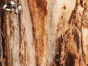 Причины отслоения коры яблони