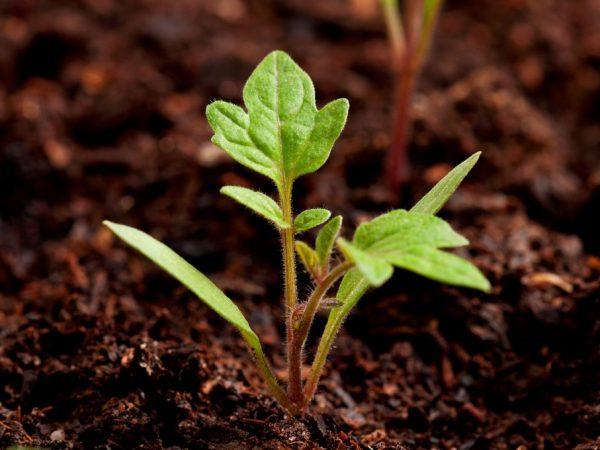 Растения нуждаются в регулярном поливе