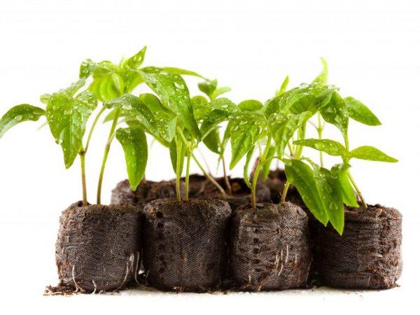 От правильности посадки зависит урожайность растений