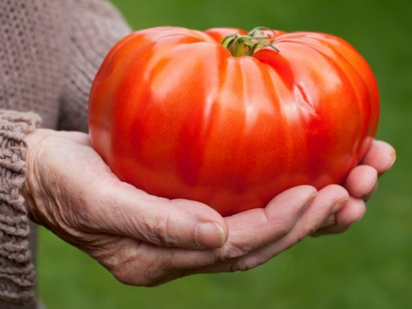 Помидоры выращивают в теплицах или парниках