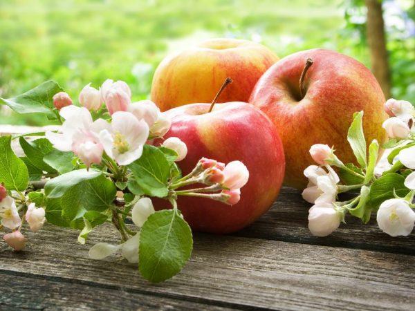 Какова масса одного яблока