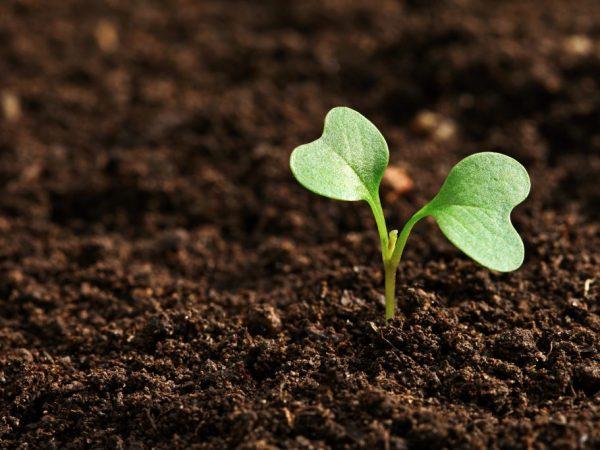 Высаживаем рассаду в прогретую землю