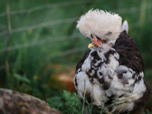 Птиц нужно содержать за ограждением