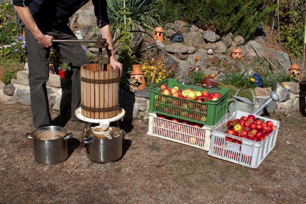 многим эта соковыжималка своими руками для яблок фото плодов начинается появления