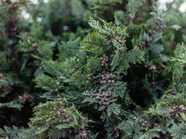 Регулярно осматривайте деревья на наличие признаков заболеваний