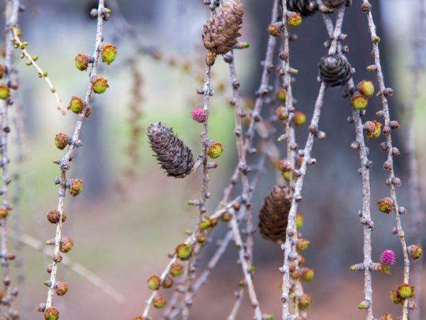 Профилактическая обработка защитит дерево от вредителей