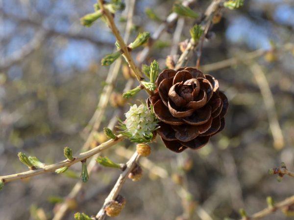 Для профилактики заболеваний деревья необходимо обрабатывать