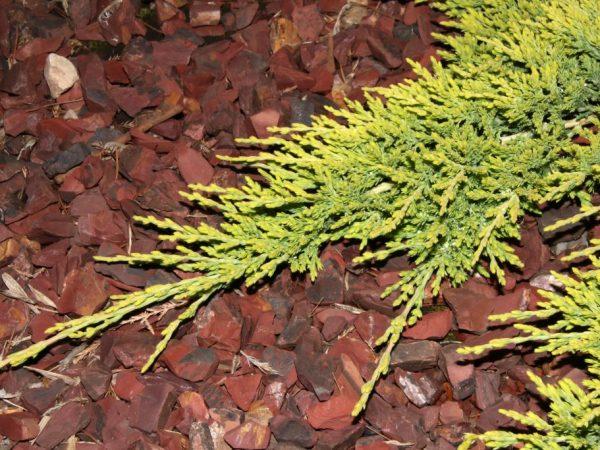 Здоровье растения зависит от качества ухода