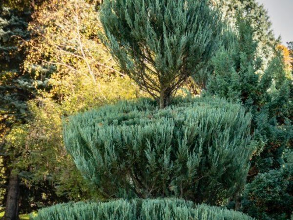 Придаем растениям оригинальный внешний вид
