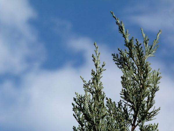 При плохом уходе дерево заболеет
