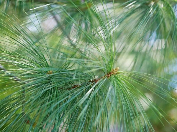 Хороший уход сохранит здоровье дерева