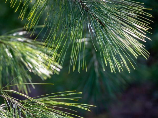 За деревом легко ухаживать