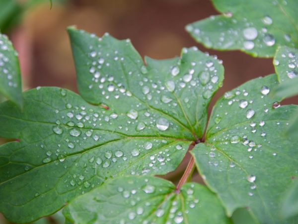 Органические удобрения повышают плодородность почвы