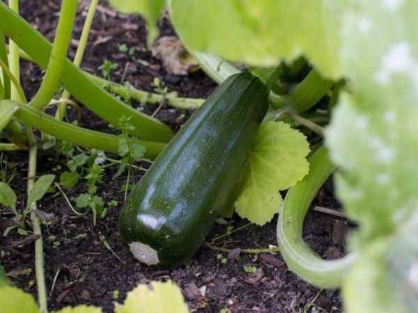 Овощи долго сохраняются в свежем виде