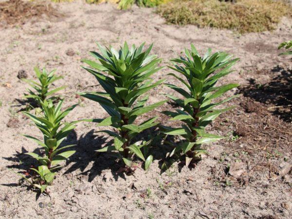 Погодные условия оказывают влияние на рост растений