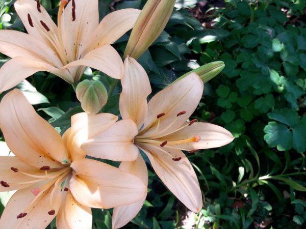 Здоровье цветов зависит от правильности ухода