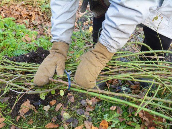 При правильной подготовке к зиме растения останутся здоровыми